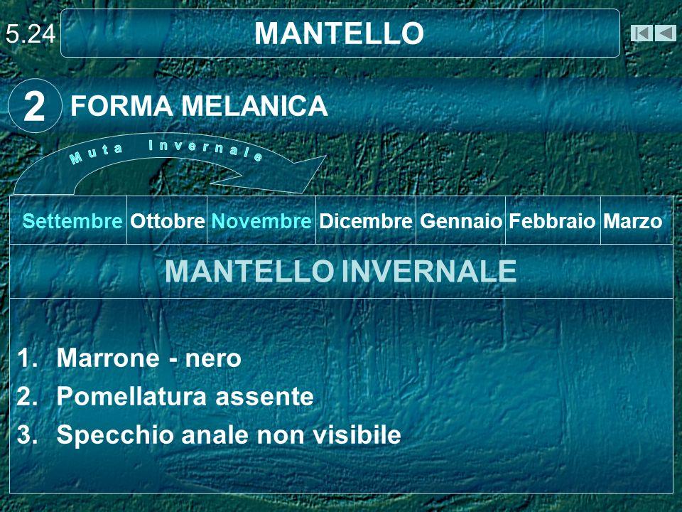 2 MANTELLO MANTELLO INVERNALE FORMA MELANICA 5.24 Marrone - nero