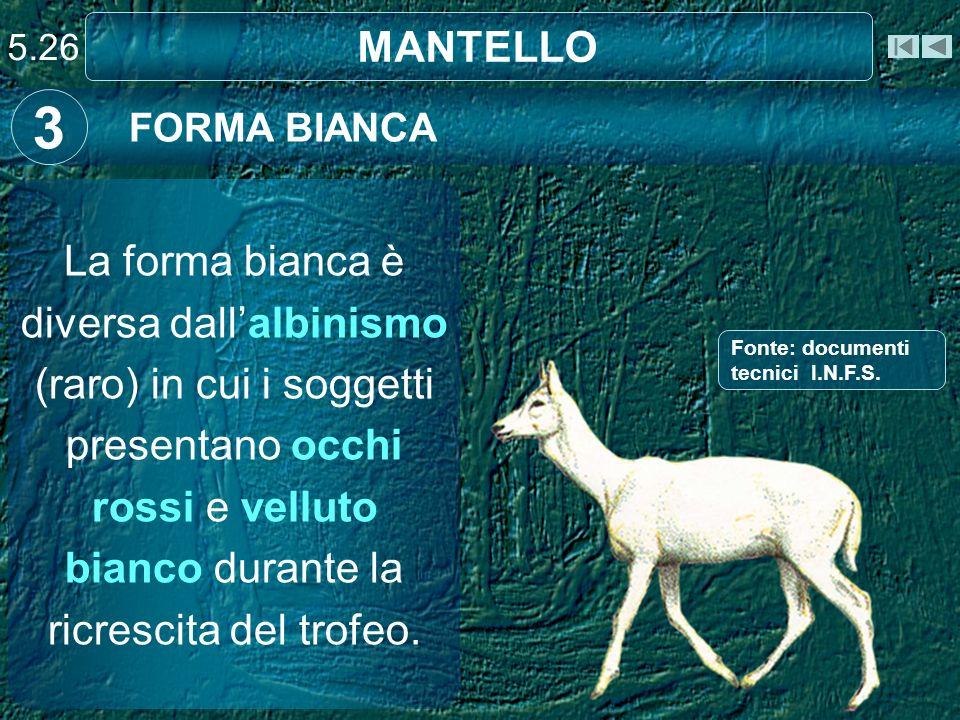 5.26 MANTELLO. 3. FORMA BIANCA.
