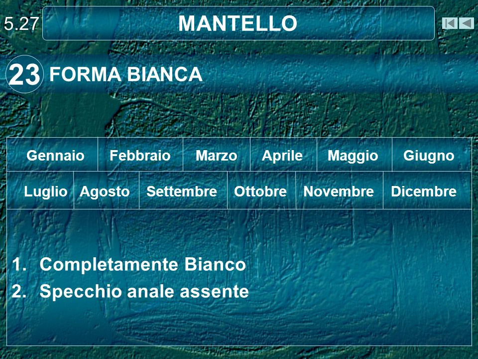 23 MANTELLO FORMA BIANCA 5.27 Completamente Bianco