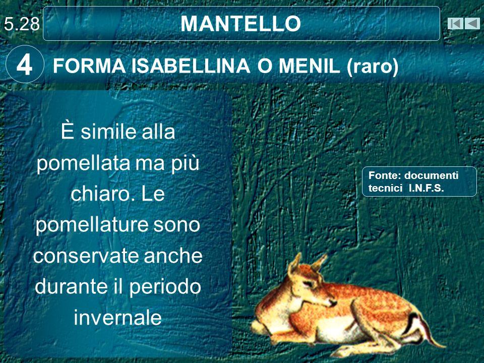 5.28 MANTELLO. 4. FORMA ISABELLINA O MENIL (raro)