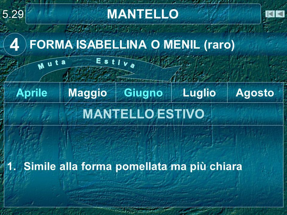 4 MANTELLO MANTELLO ESTIVO FORMA ISABELLINA O MENIL (raro) 5.29 Aprile
