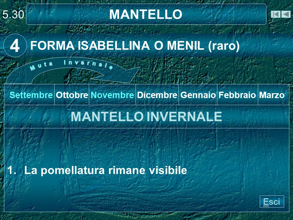 4 MANTELLO MANTELLO INVERNALE FORMA ISABELLINA O MENIL (raro) 5.30
