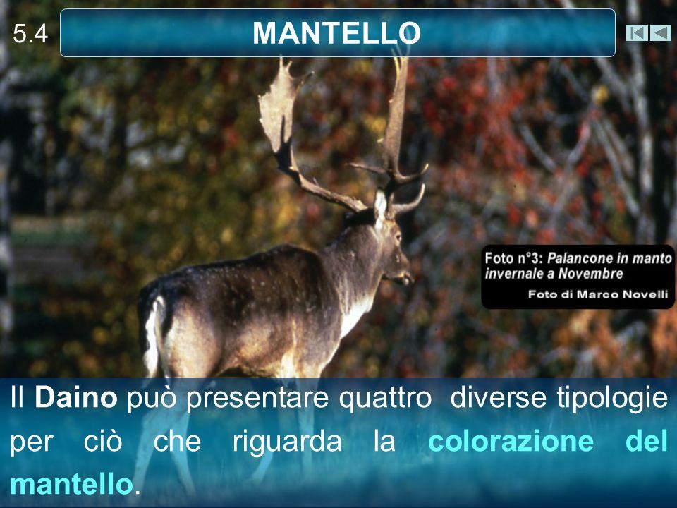 5.4 MANTELLO.