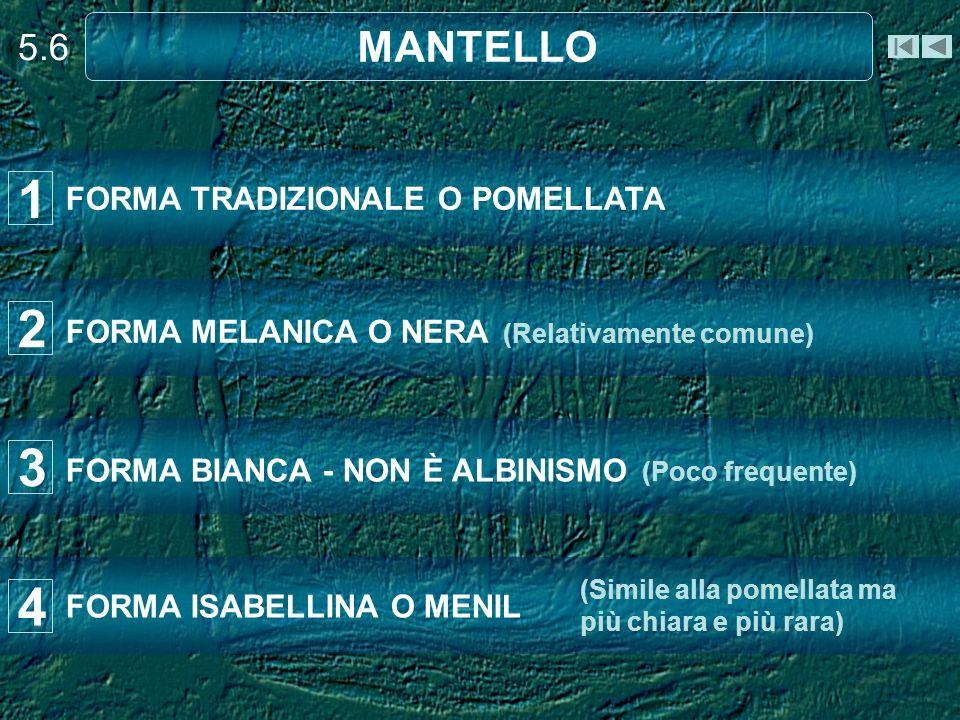 1 2 3 4 MANTELLO 5.6 FORMA TRADIZIONALE O POMELLATA