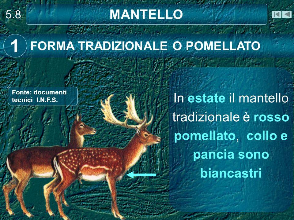 5.8 MANTELLO. 1. FORMA TRADIZIONALE O POMELLATO. Fonte: documenti tecnici I.N.F.S.