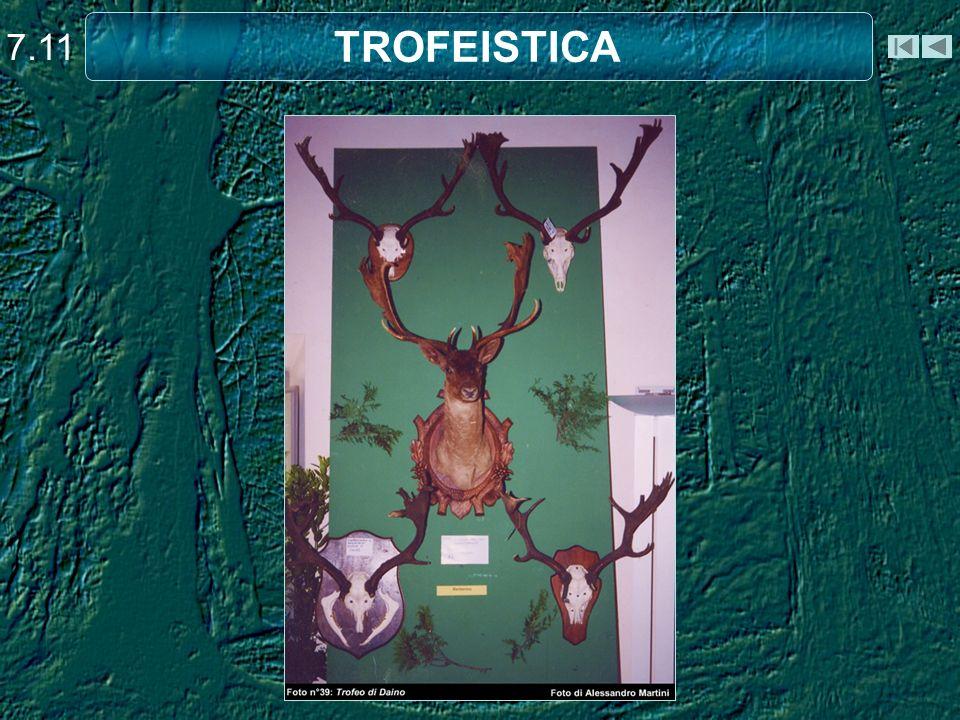 7.11 TROFEISTICA