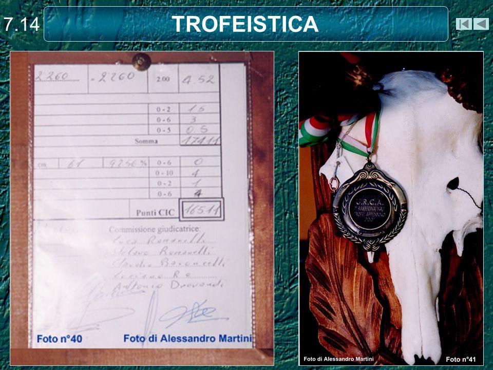7.14 TROFEISTICA