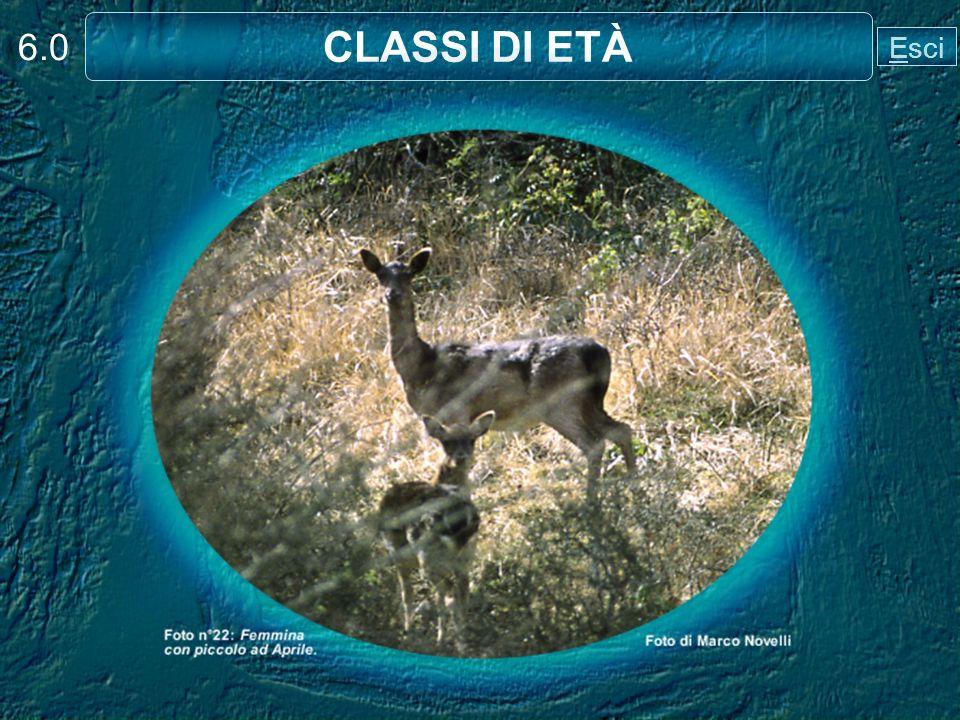 6.0 CLASSI DI ETÀ Esci
