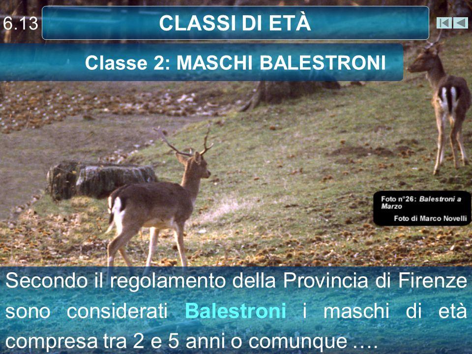 Classe 2: MASCHI BALESTRONI