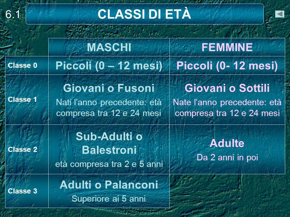 CLASSI DI ETÀ 6.1 MASCHI FEMMINE Piccoli (0 – 12 mesi)