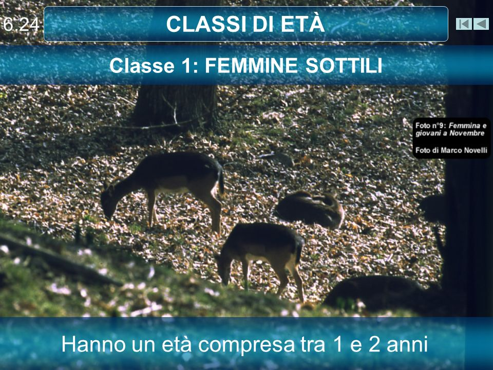 Classe 1: FEMMINE SOTTILI
