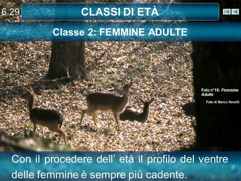 Classe 2: FEMMINE ADULTE