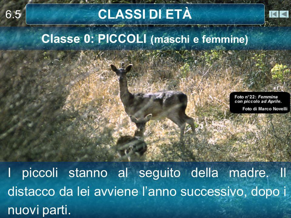 Classe 0: PICCOLI (maschi e femmine)
