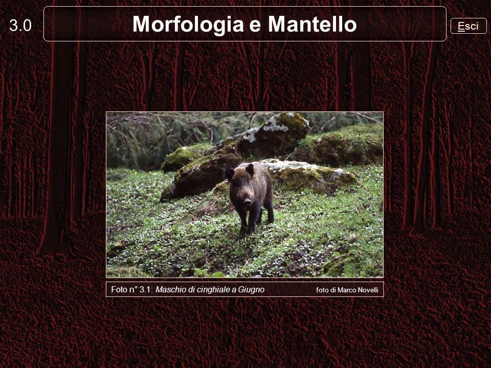 Morfologia e Mantello 3.0 Esci