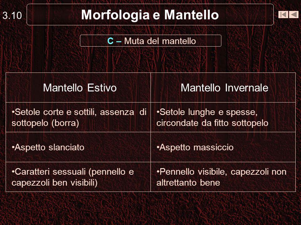 Morfologia e Mantello Mantello Estivo Mantello Invernale 3.10