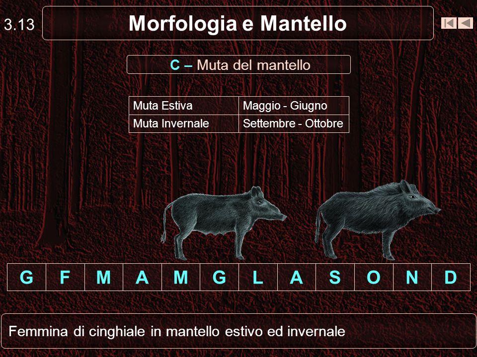 Morfologia e Mantello G F M A M G L A S O N D 3.13