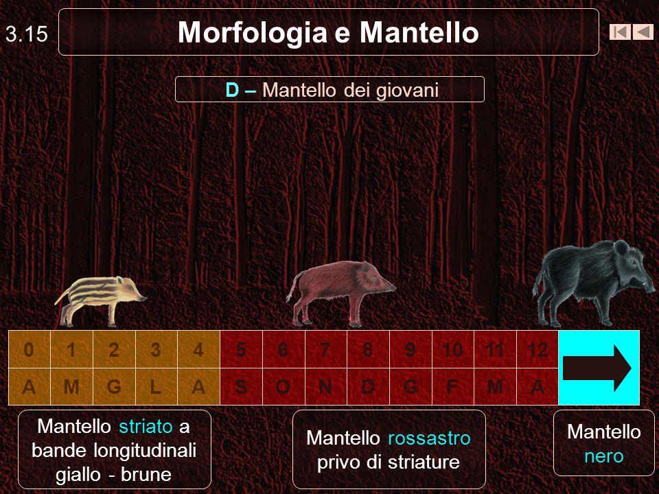 Morfologia e Mantello 3.15 D – Mantello dei giovani 1 2 3 4 5 6 7 8 9