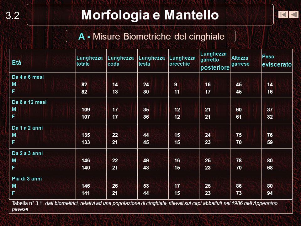 A - Misure Biometriche del cinghiale
