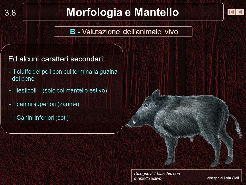 B - Valutazione dell'animale vivo