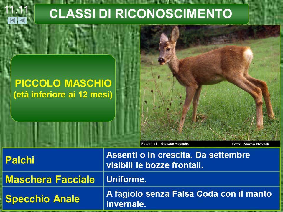 CLASSI DI RICONOSCIMENTO PICCOLO MASCHIO (età inferiore ai 12 mesi)