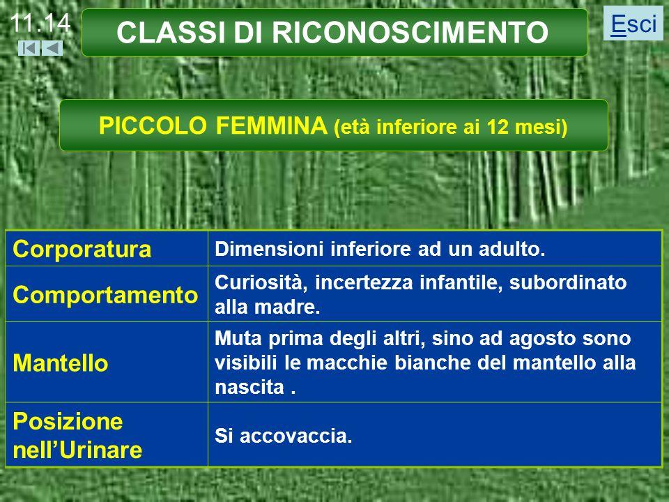 CLASSI DI RICONOSCIMENTO PICCOLO FEMMINA (età inferiore ai 12 mesi)
