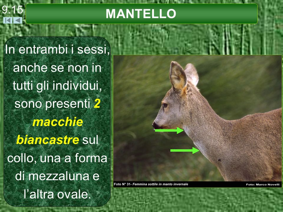 9.15 MANTELLO.