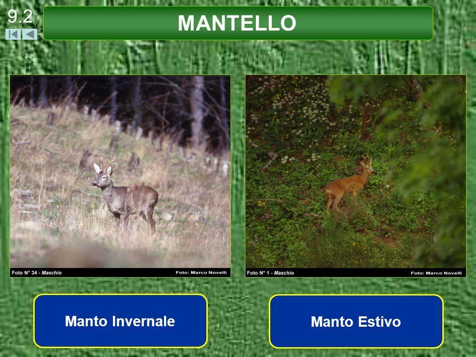 9.2 MANTELLO Manto Invernale Manto Estivo