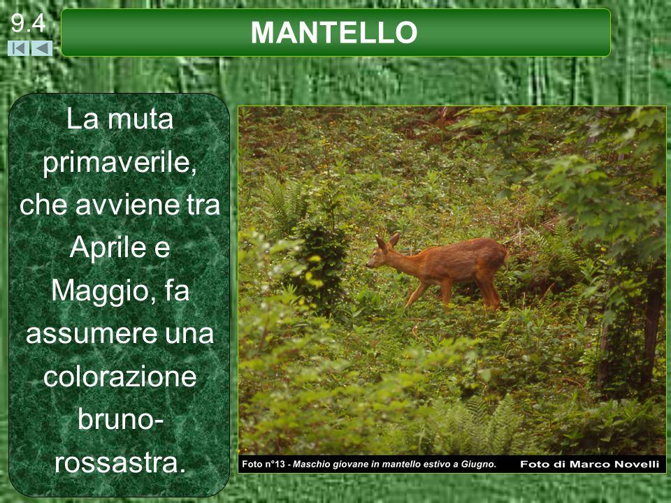 9.4 MANTELLO.