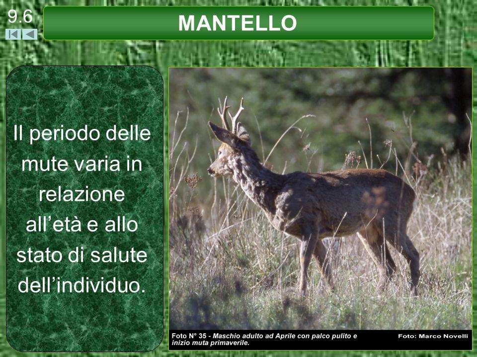 9.6 MANTELLO.