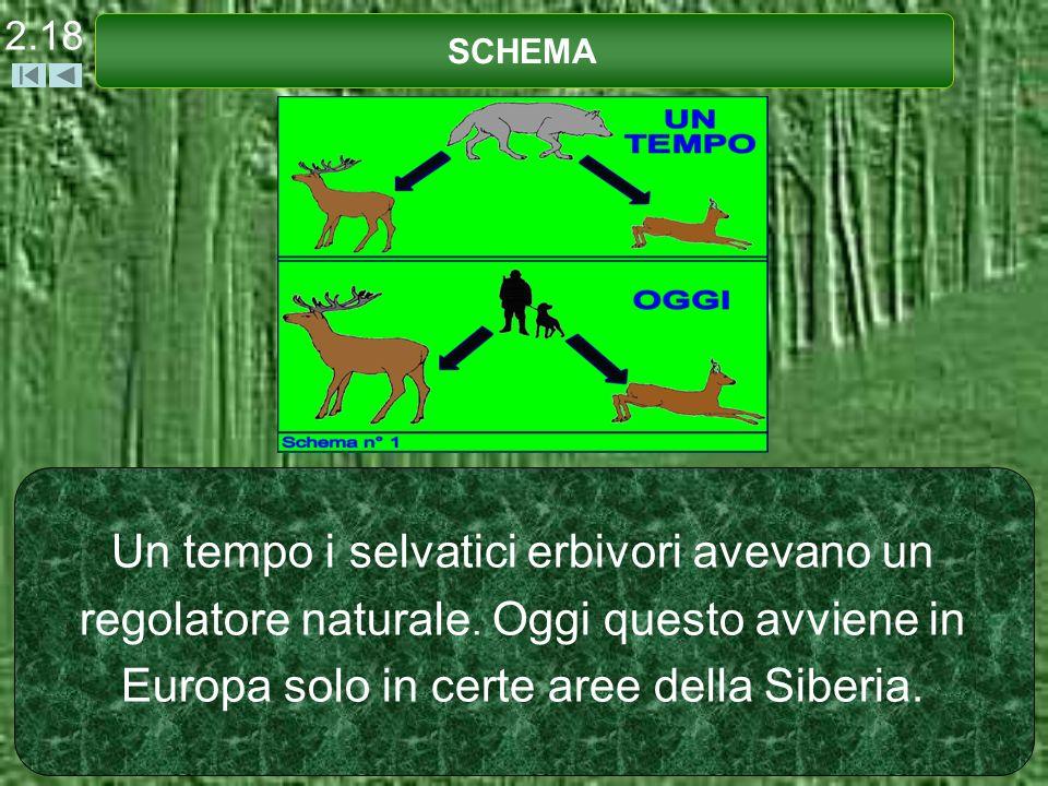 2.18 SCHEMA. Un tempo i selvatici erbivori avevano un regolatore naturale.