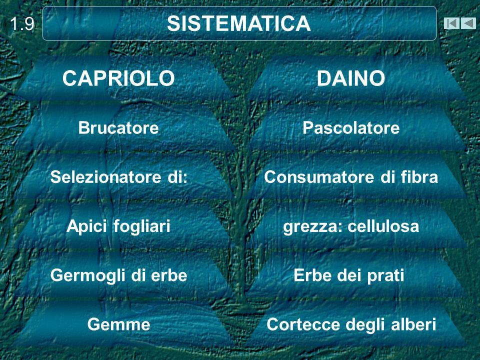 SISTEMATICA CAPRIOLO DAINO