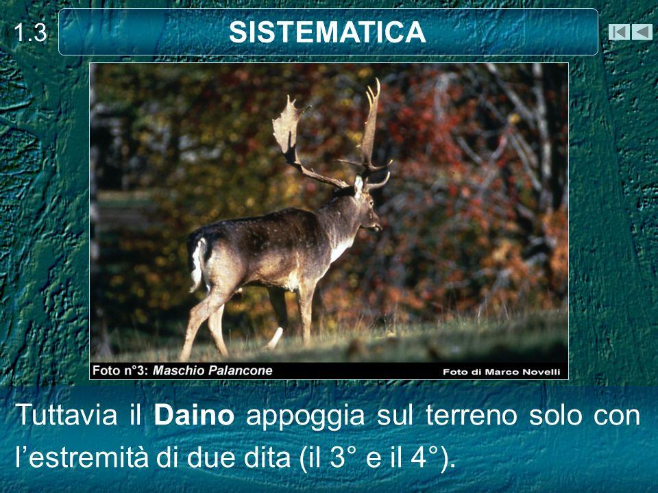 1.3 SISTEMATICA.