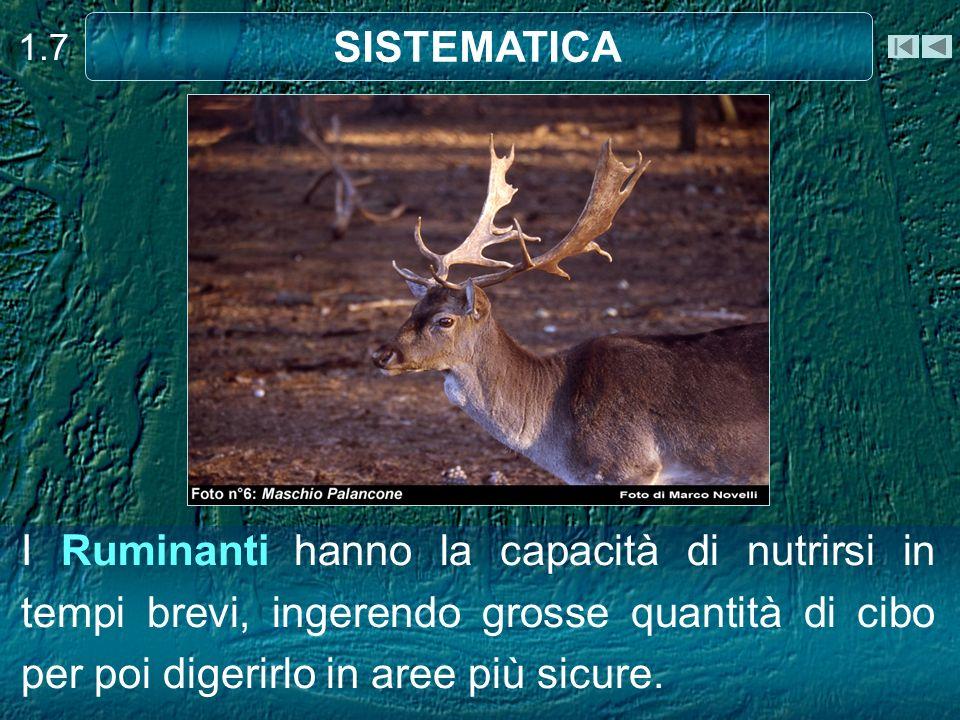 1.7 SISTEMATICA.