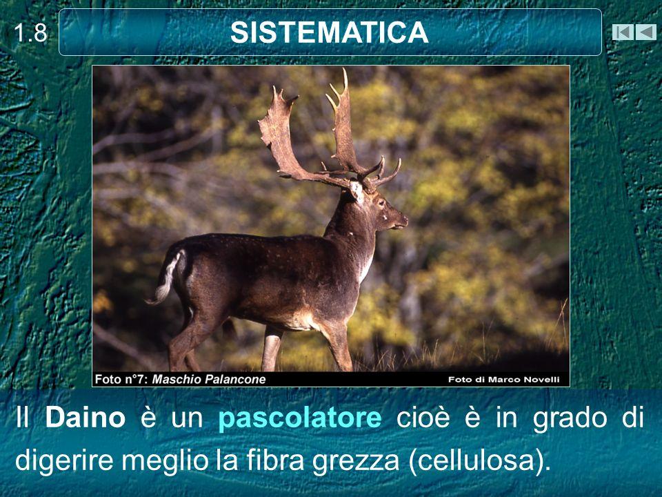 1.8 SISTEMATICA.
