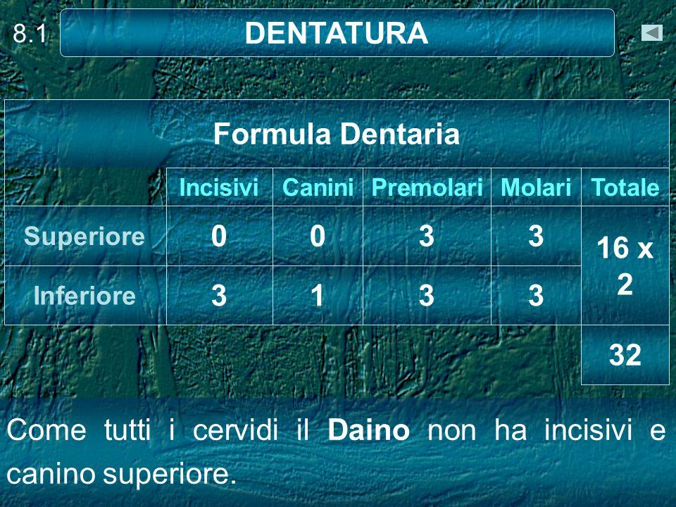 DENTATURA Formula Dentaria 3 3 16 x 2 3 1 3 3 32
