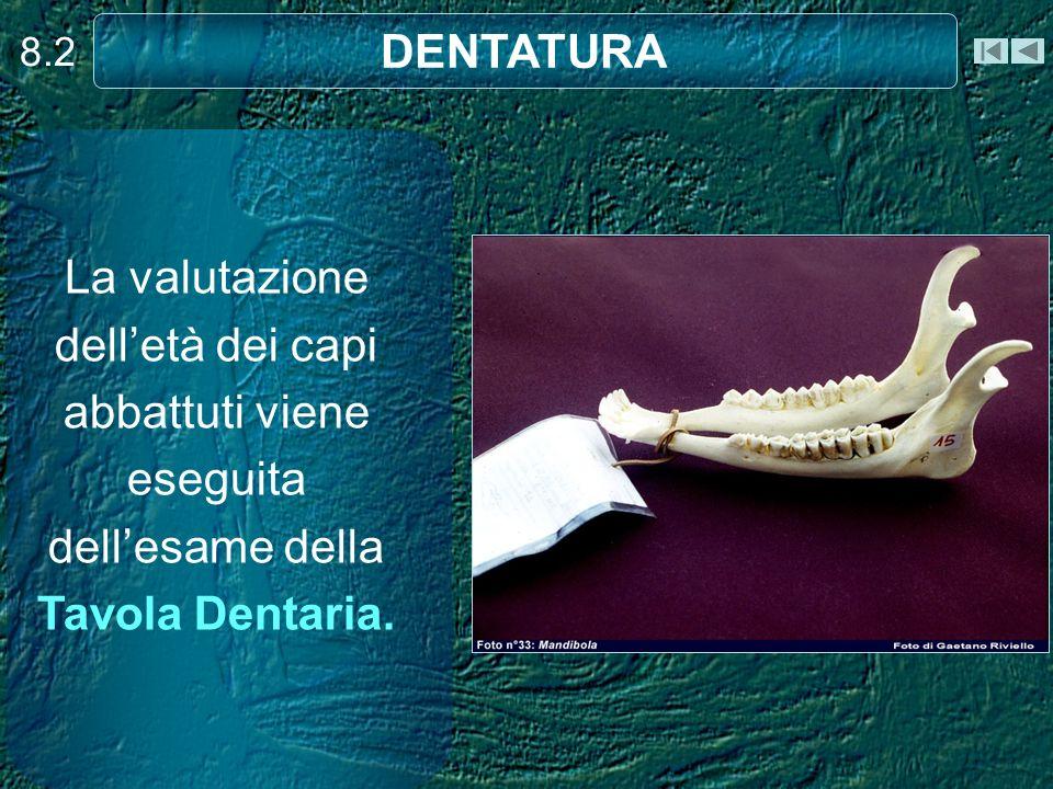 8.2 DENTATURA. La valutazione dell'età dei capi abbattuti viene eseguita dell'esame della Tavola Dentaria.