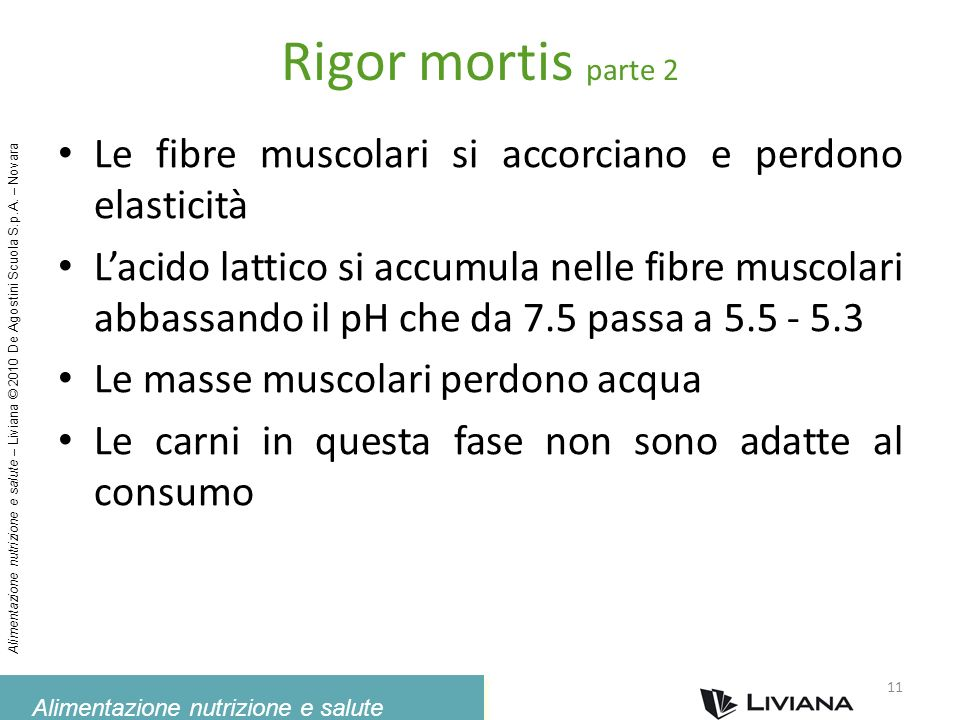 Rigor mortis parte 2Le fibre muscolari si accorciano e perdono elasticità.