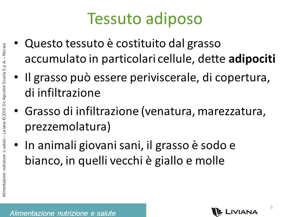Tessuto adiposoQuesto tessuto è costituito dal grasso accumulato in particolari cellule, dette adipociti.