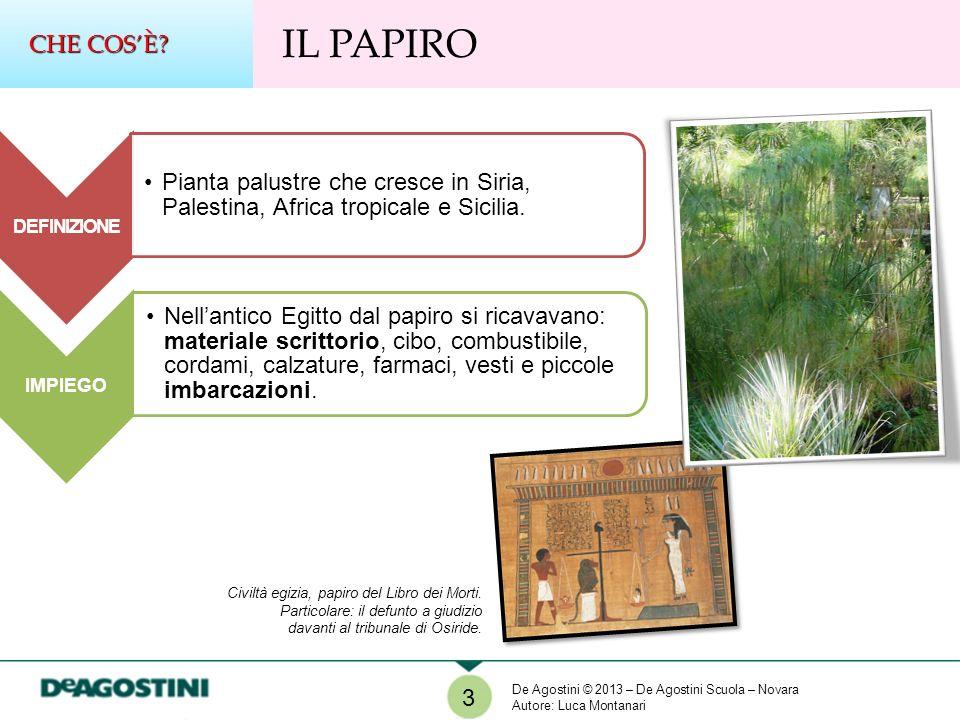 CHE COS'È IL PAPIRO. DEFINIZIONE. Pianta palustre che cresce in Siria, Palestina, Africa tropicale e Sicilia.