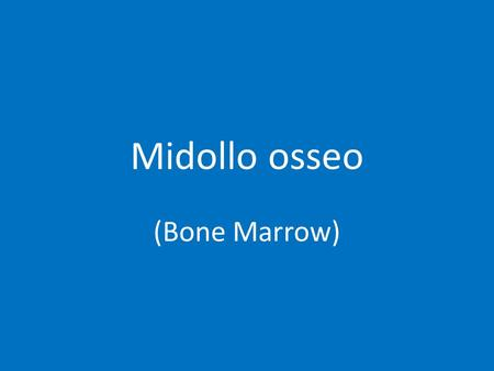 Midollo osseo (Bone Marrow).