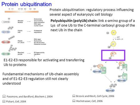 Protein ubiquitination Passmore, and Bardford, Biochem J, 2004 Pickart, Cell, 2004 Brzovic and Klevit, Cell Cycle, 2006 Hochstrasser, Cell, 2006 Protein.