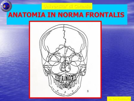 ANATOMIA IN NORMA FRONTALIS