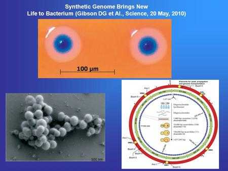Synthetic Genome Brings New Life to Bacterium (Gibson DG et Al., Science, 20 May, 2010)