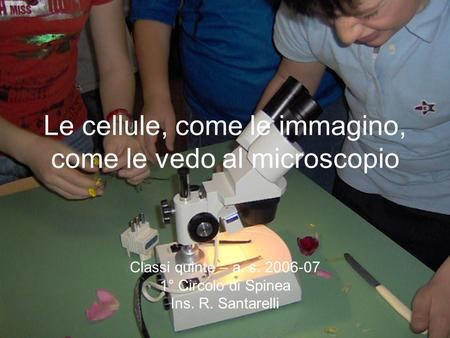Le cellule, come le immagino, come le vedo al microscopio