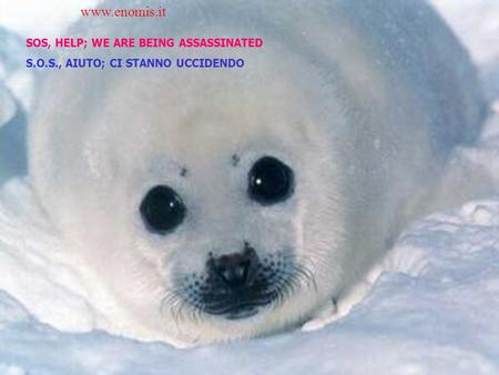 SOS, HELP; WE ARE BEING ASSASSINATED S.O.S., AIUTO; CI STANNO UCCIDENDO www.enomis.it.