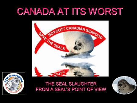 CANADA AT ITS WORST THE SEAL SLAUGHTER FROM A SEALS POINT OF VIEW.
