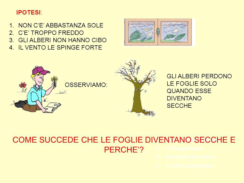 COME SUCCEDE CHE LE FOGLIE DIVENTANO SECCHE E PERCHEu0027
