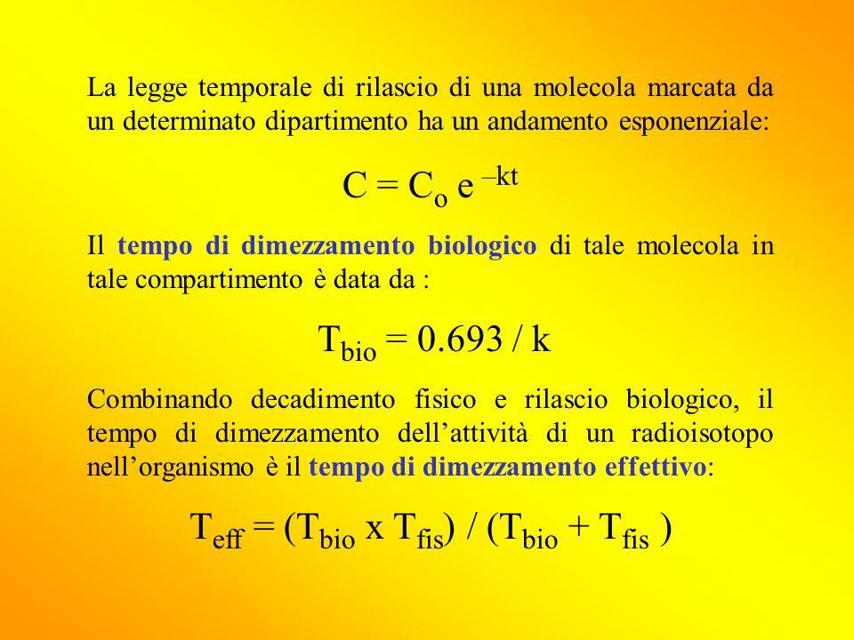 metà vita e radioisotopo datazione foglio di lavoro risposte