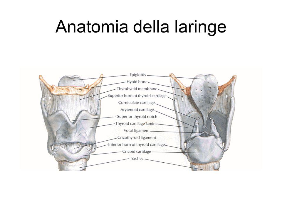 Anatomia della laringe - ppt scaricare