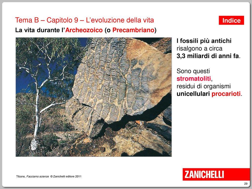 C14 risalente ai fossili
